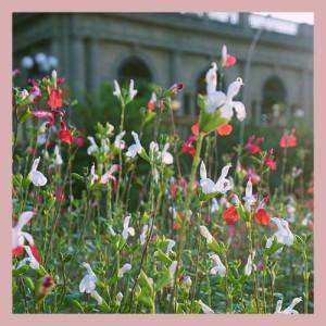 小花園系列-系列介紹